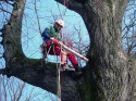 VTA alberi delle Mura di Lucca