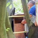 Percorsi per il controllo della popolazione di piccioni della Città di Mantova