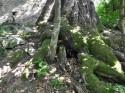 Censimento degli alberi monumentali della Provincia di Pistoia