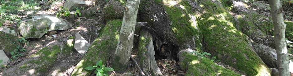 alberi-slide-interne-940