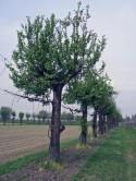 BioBaM – Biodiversità nel Basso Mantovano