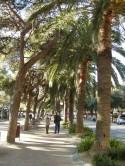 Censimento del verde pubblico del Comune di Arenzano