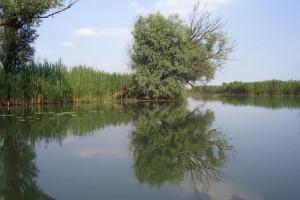 """Piano di Gestione della Riserva Naturale """"Valli del Mincio"""""""